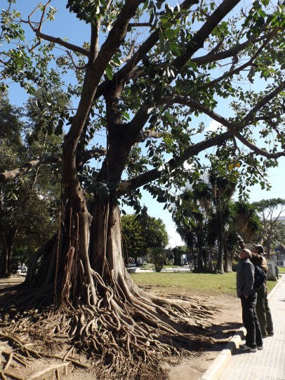 Dad and Phil admiring the funky trees in Cádiz