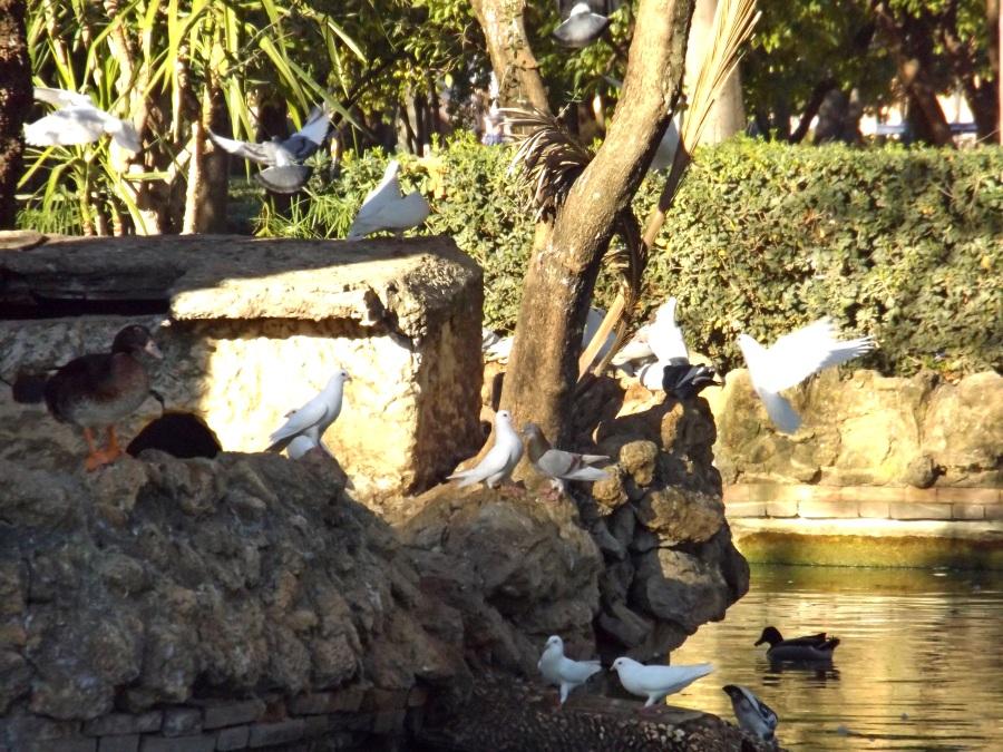 Birds in Parque Maria Luisa