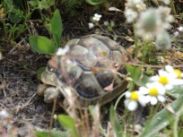 Baby tortoise spotted amongst the ruins of Hayden's Library in Athens